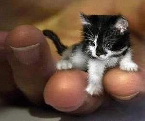 the baby cat is so cute image