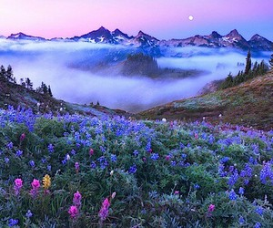 flowers, nature, and mountains image