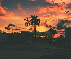 sunset, palms, and photography image