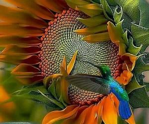 birds, beautiful, and nature image