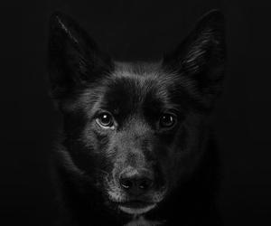 animals, black, and dog image