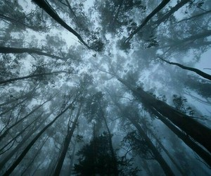 beautiful, forest, and sky image