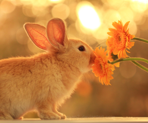 rabbit, flowers, and cute image