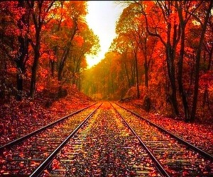 autumn, beautiful pictures, and fall image