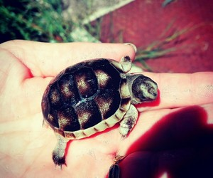 animals, tartaruga, and beautiful image