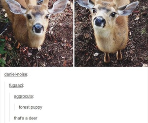 deer, funny, and cute image