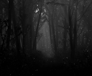 forest, night, and tree image