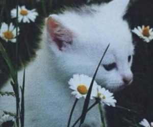 cat, chamomile, and flowers image