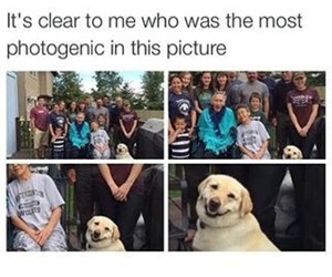 funny, dog, and photo image