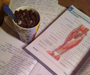 anatomy, medicine, and study hard image