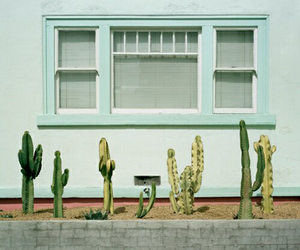 cactus, plants, and blue image