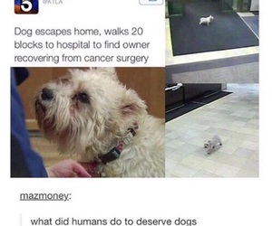 dog, awesome, and funny image