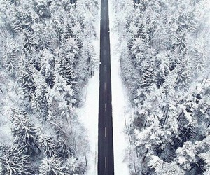 forest, road, and trees image
