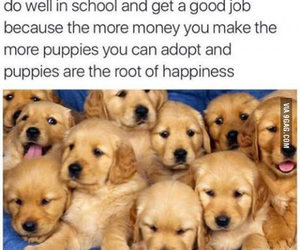 puppy, money, and quotes image