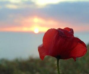 crimea, summer, and nature image