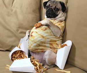 dog and potato image