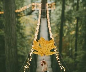 autumn, bridge, and leafs image
