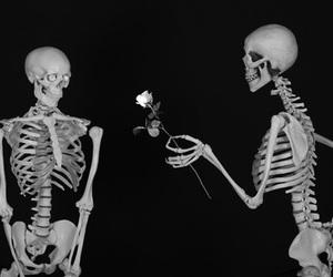 dark, rose, and theme image