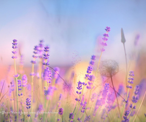explore, explored, and 青森 image