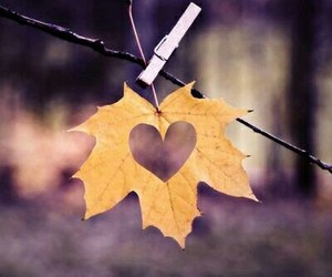 heart, autumn, and leaves image