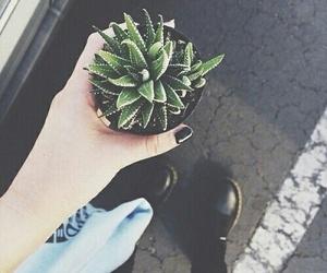 grunge, plants, and black image