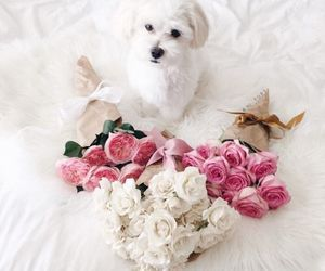 flowers, dog, and white image