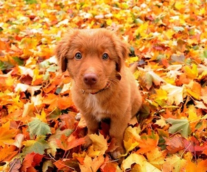 puppy, cute, and autumn image