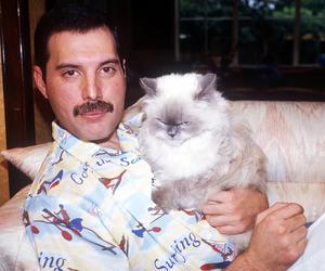 Freddie Mercury, Queen, and cat image