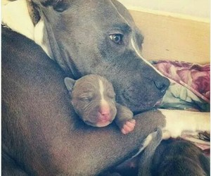 dog, love, and baby image