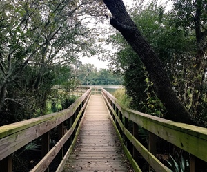 beautiful, bridge, and forest image