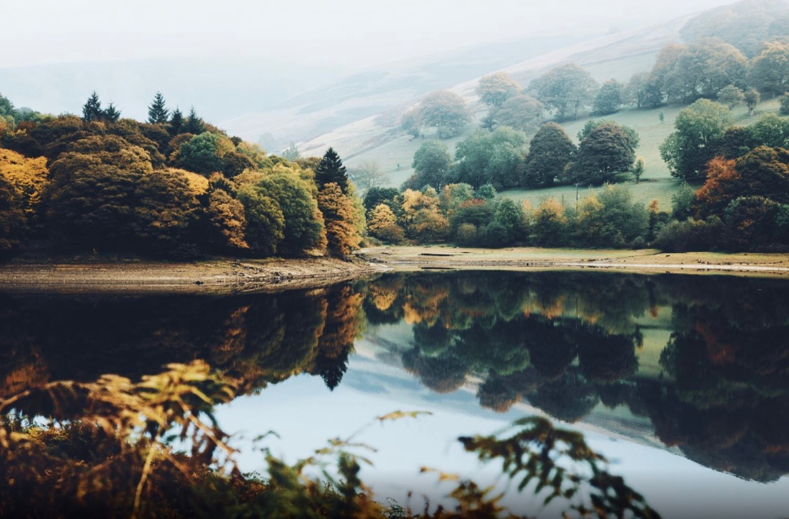 forest, lake, and mist image