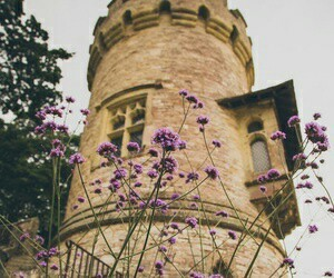 flowers, tower, and castle image