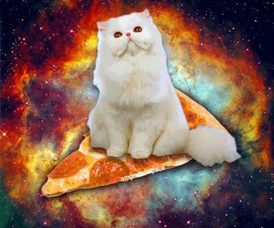 animals, pizza, and space image