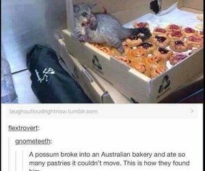 funny, possum, and food image