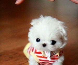 cute, dog, and small image