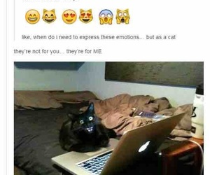 funny, tumblr, and cat image