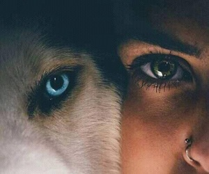 eyes, wolf, and dog image
