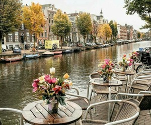 flowers, amsterdam, and city image