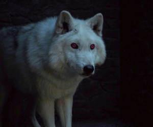 ghost, wolf, and game of thrones image