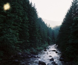 nature, outdoors, and photography image