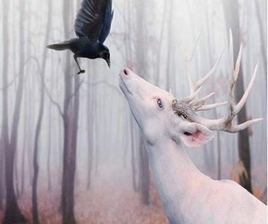 deer, animal, and crow image
