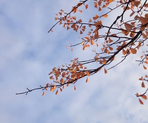 autumn, Herbst, and Sonne image