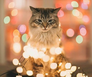 cat, lights, and merry christmas image