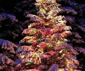 christmas, christmas tree, and light image