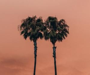orange, palm trees, and palms image
