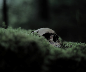 skull, green, and aesthetic image