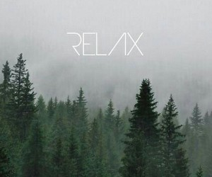 relax, wallpaper, and forest image