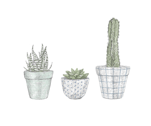 cactus, drawing, and illustration image