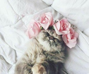 kitty, cute, and flowercrown image