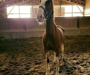 horse, white, and chesnut image